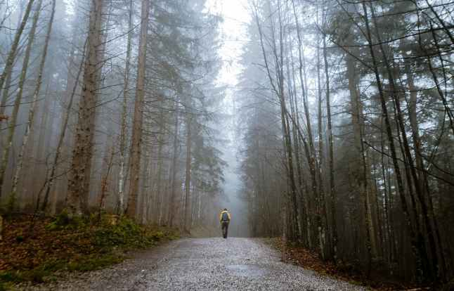 alone autumn mood forest cold countryside
